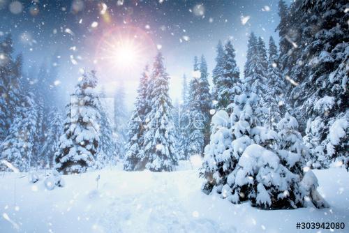 Winter Wonderland Falling Snow Photos Royalty Free Images Graphics Vectors Videos Adobe Stock Christmas Background Winter Background Winter Landscape