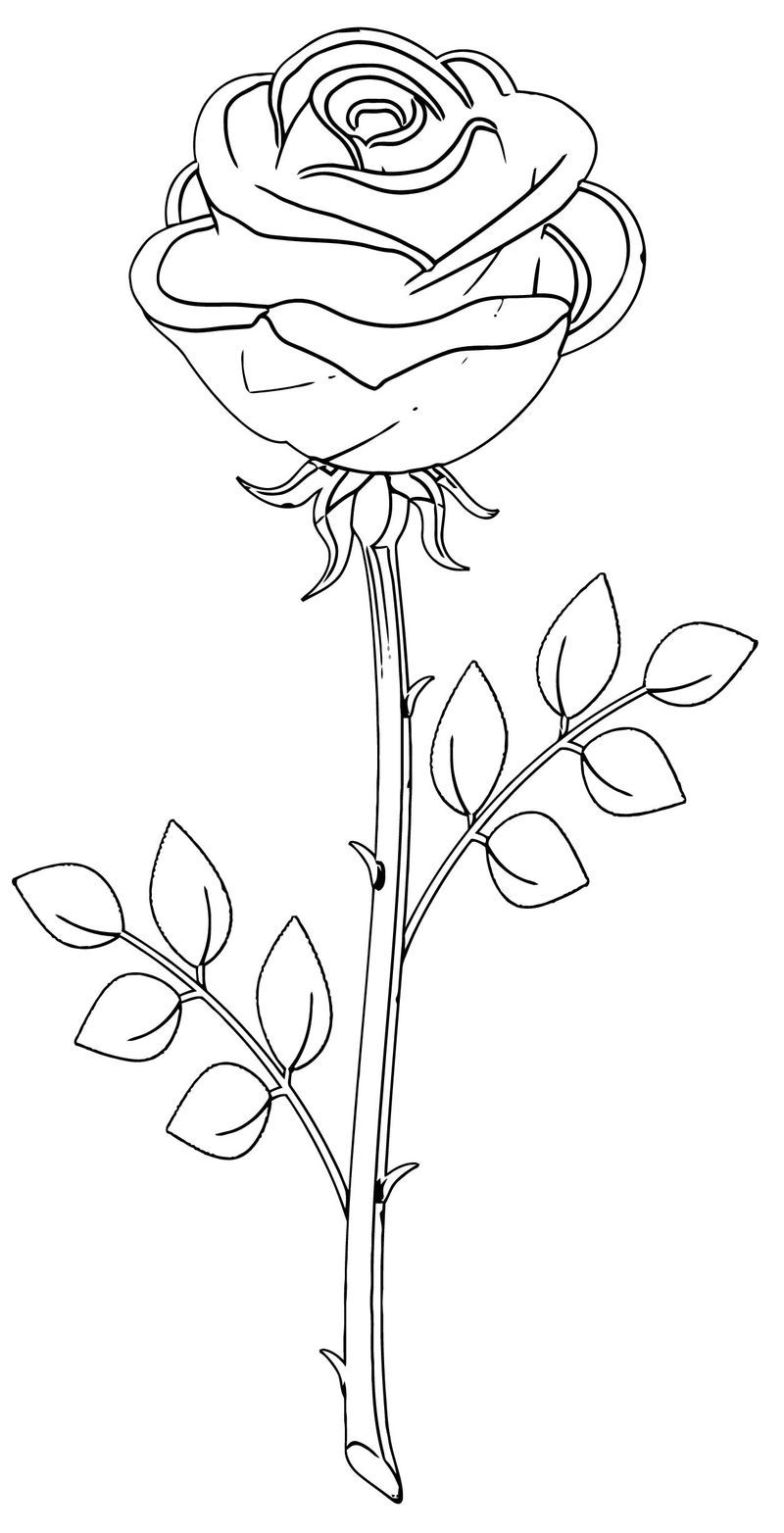 Rose Flower Coloring Page 020 Rose Coloring Pages Flower Coloring Pages Rose Flower Colors