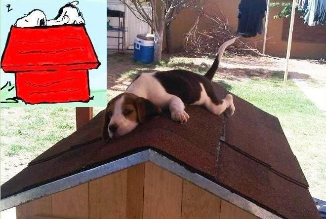 He's real! this is something Flo would totally do if you had a dog house!