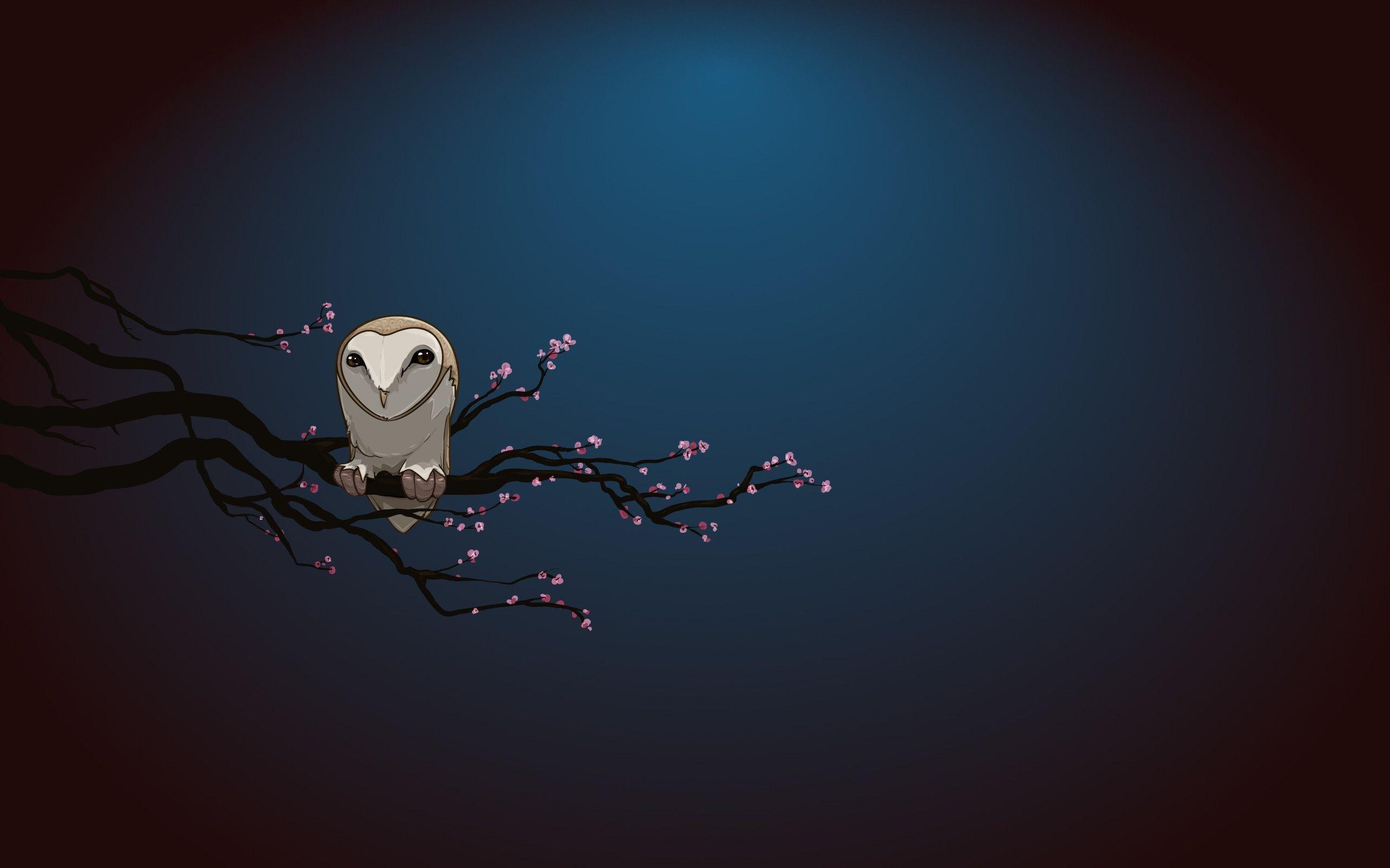 2560x1600 Wallpaper Owl Branch Night Owl Wallpaper Art Wallpaper Art Wallpaper Iphone