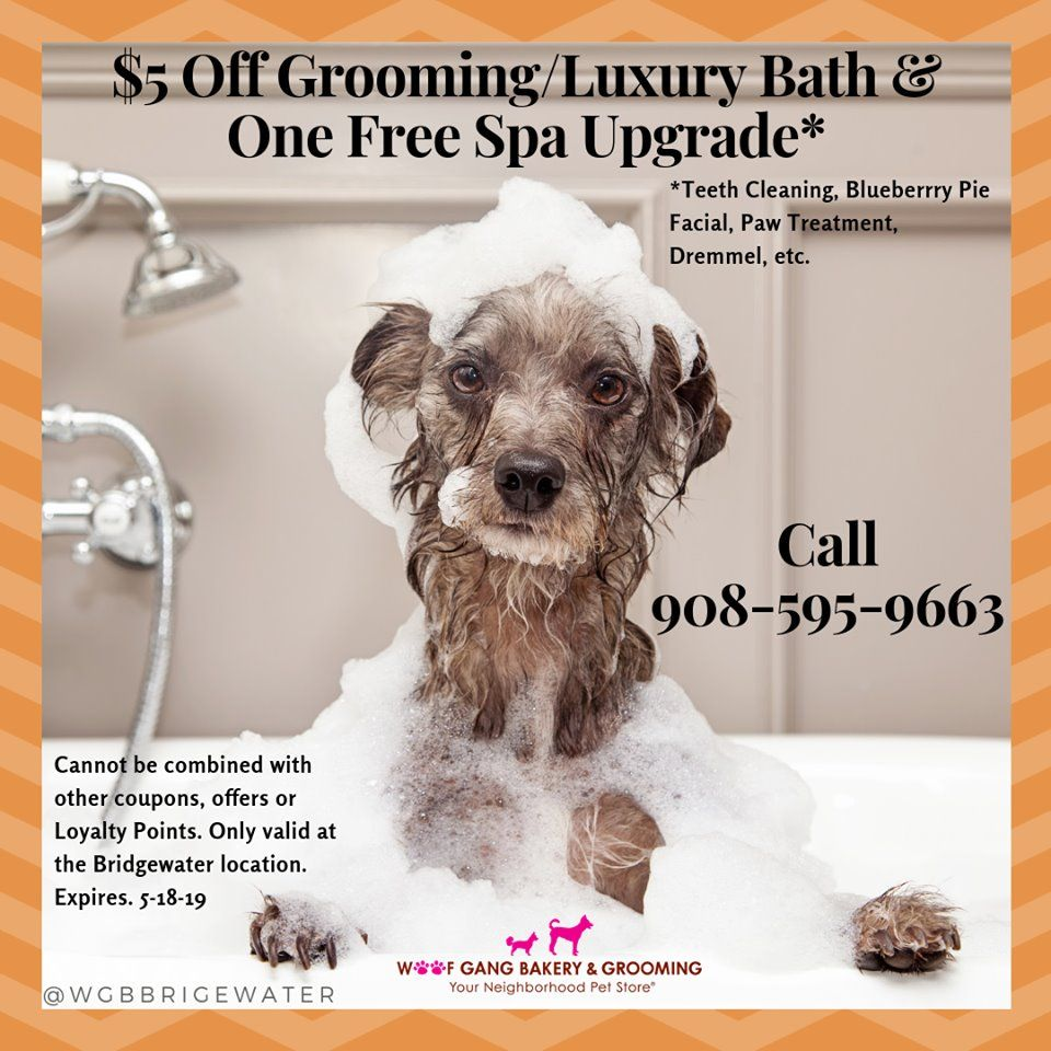 Limited Time Offer 5 Off A Grooming Luxury Bath Plus One Free Spa Upgrade Must Schedule An Appointment Now Until Sunda Teeth Cleaning Luxury Bath Grooming