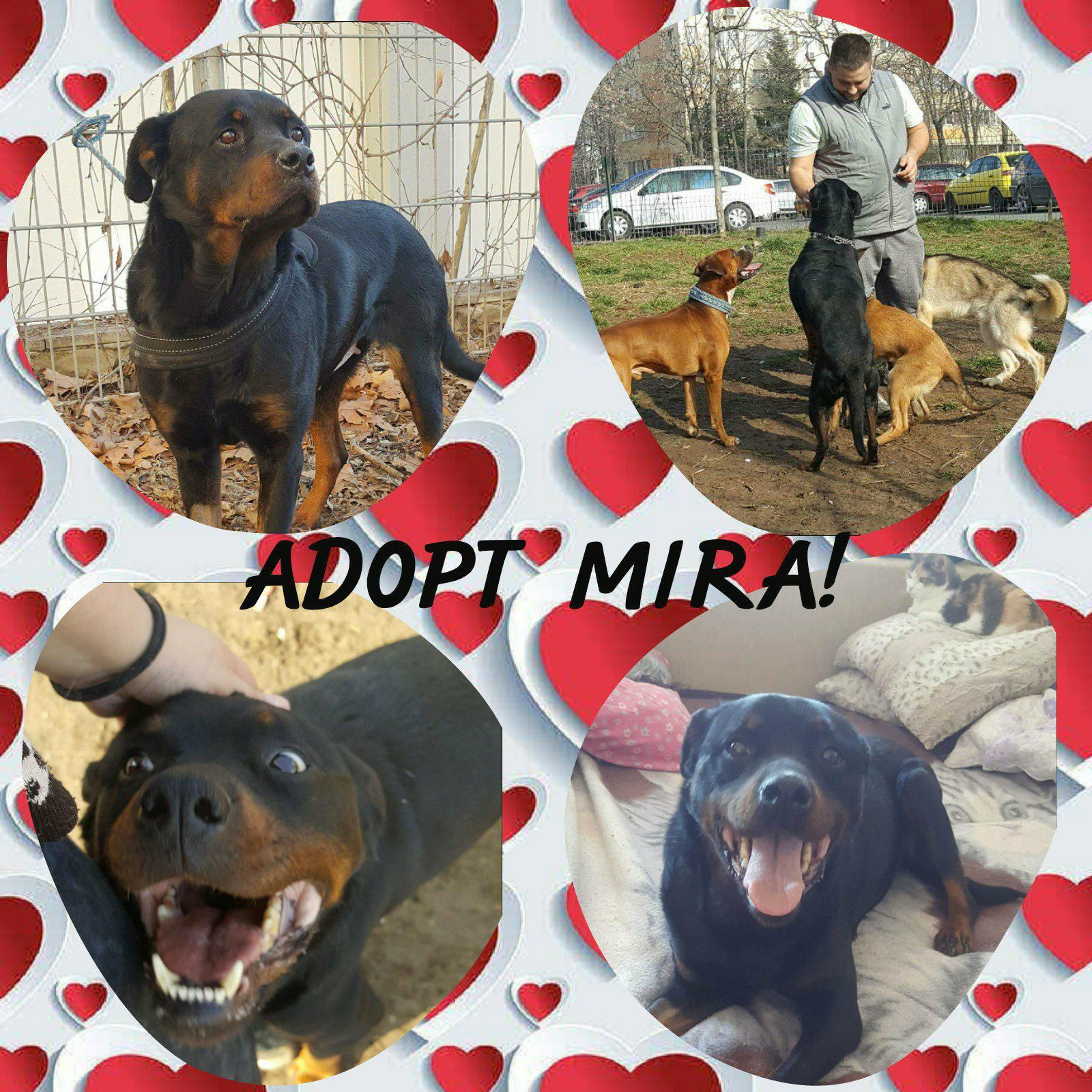 Rescueddog Animalwelfare Help Mira Is A Gentle And Rare Balanced