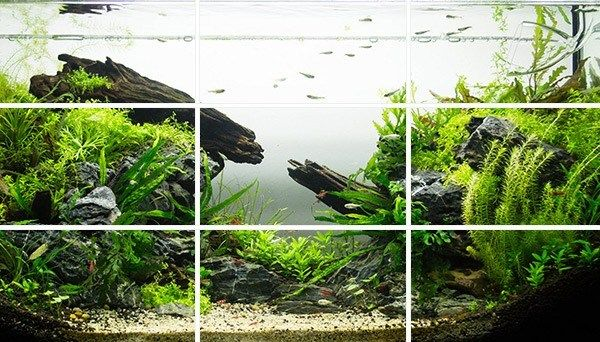 The rule of thirds is key in a beautiful aquascape natural ...