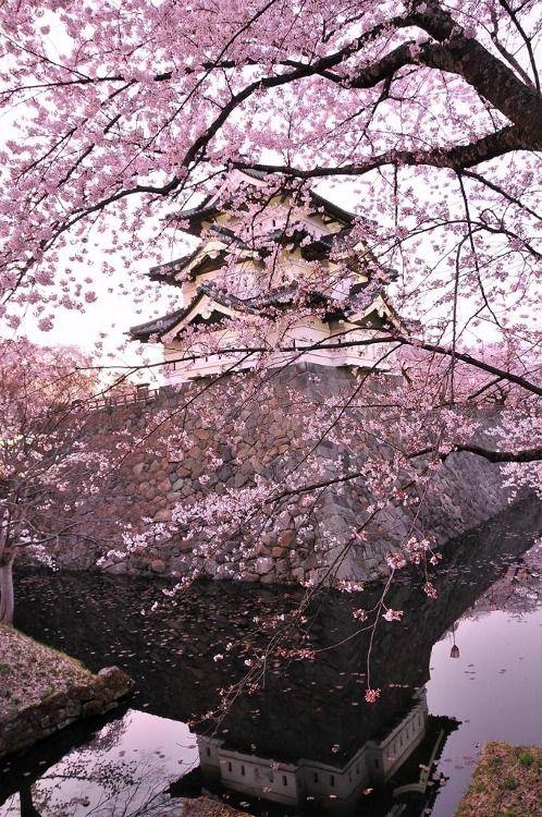 1 Tumblr Japan Cherry Blossom Festival Cherry Blossom Japan Japan Garden