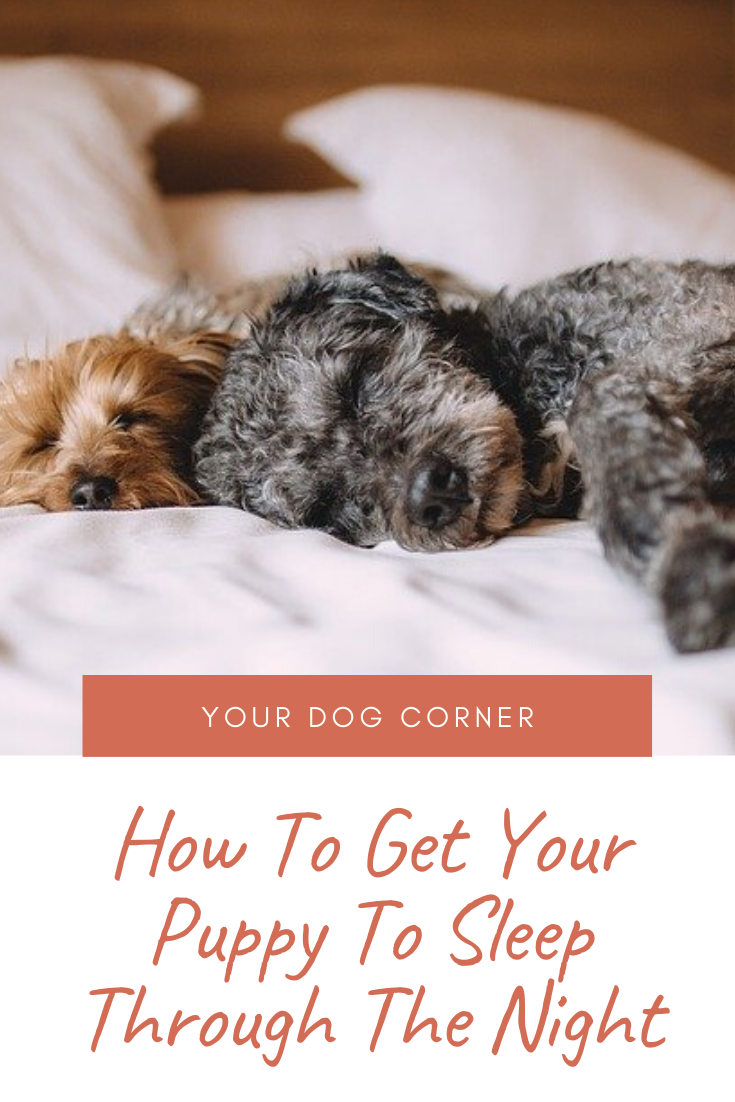 How To Get Your Puppy To Sleep Through The Night With Images Sleeping Puppies Dog Corner Puppies