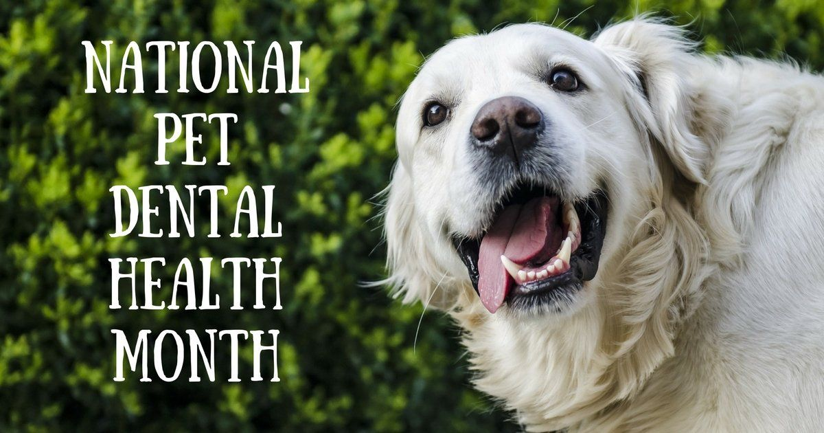 National Pet Dental Health Month February 2020 Your