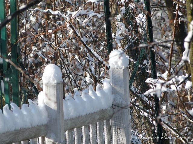 snow on our farm picket fence.