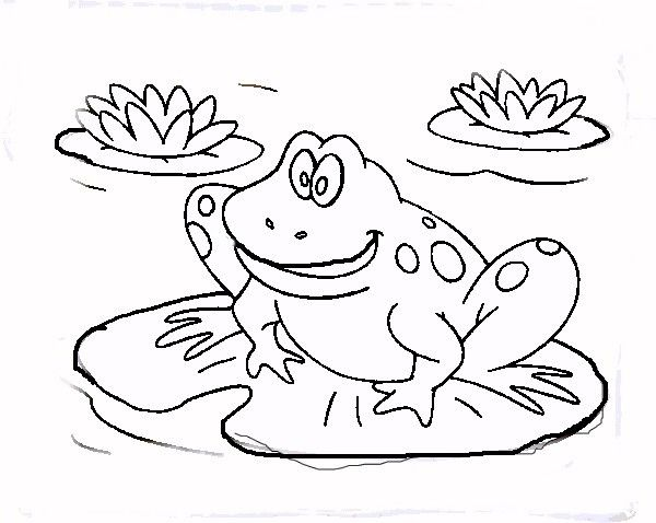 how to draw a cartoon a frog on lily pad grosir baju surabaya