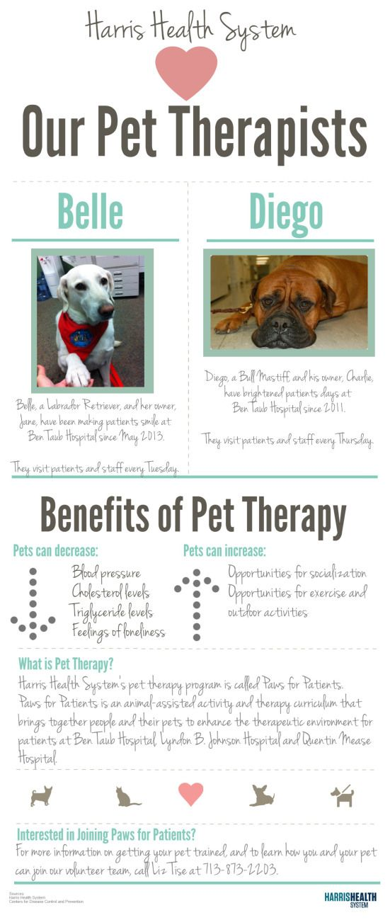We Love Our Pet Therapists Therapy Dog Training Therapy Dogs Pets