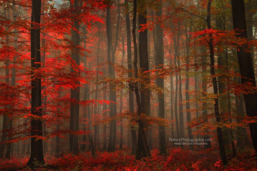 Enchanting Red