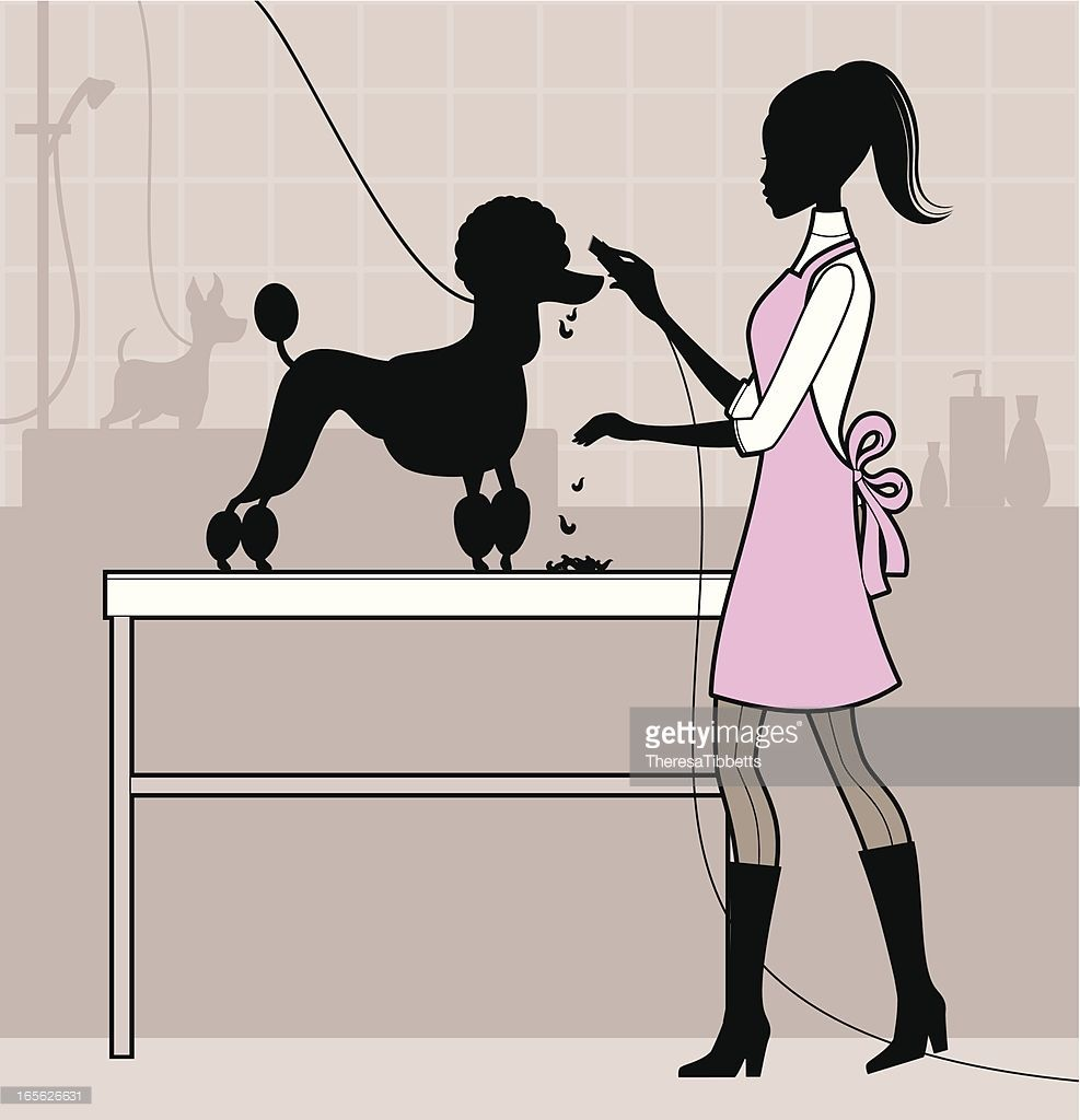A female dog groomer clipping a poodles coat tangled tails a female dog groomer clipping a poodles coat solutioingenieria Gallery