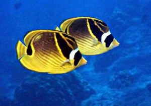 Saltwater Fish Are Generally Larger And More Expensive Than