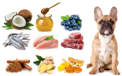 DIY Healthy Dog Treat Recipe Immune System Boost
