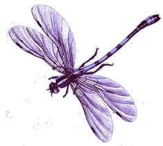 Pink Dragonfly Clipart Google Search Dragonfly Drawing Dragonfly Art Purple Tattoos