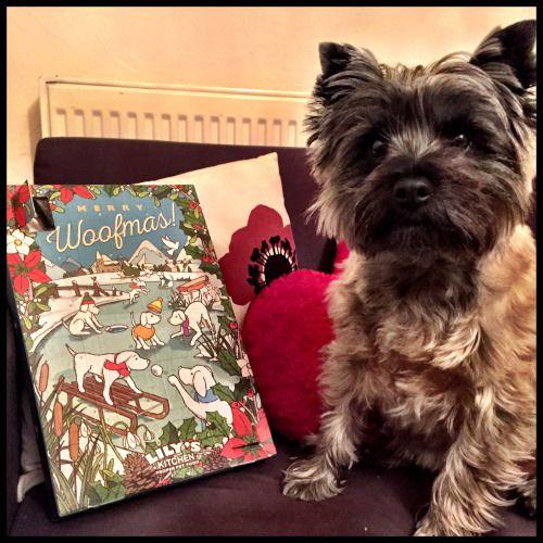 Cairn Terriers 2020 Calendar An Active Alert And Intelligent