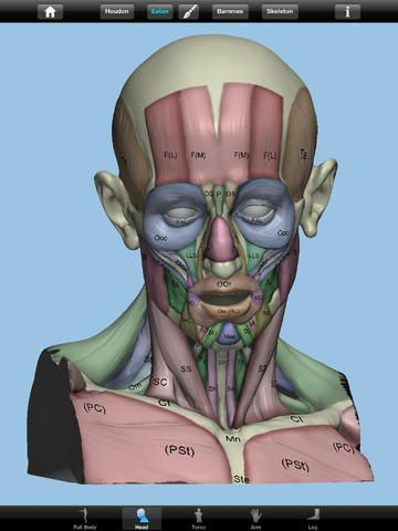Lecorch Anatomy App For Apple And Android By Md3d Tutorials