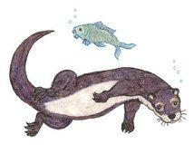 river otter diagram   otter schwimmen archivierung digita l wildlife print