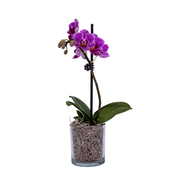 Just Add Ice Purple 5 In Orchid Plant In Wood Pot 2 Stems 270780 The Home Depot Orchids Orchid Plants Indoor Flowering Plants