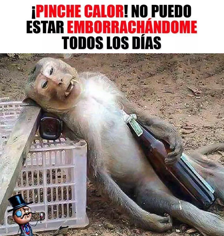 Pin De Osvaldo Calcagno En Memes Funny Chistes Groseros Memes Divertidos Comentarios Divertidos