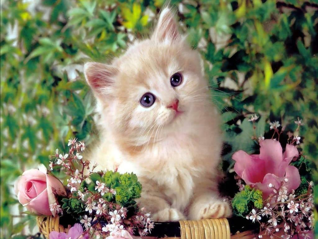 Cute Cat Pictures Hd Wallpapers 838 Full Hd Wallpaper Desktop