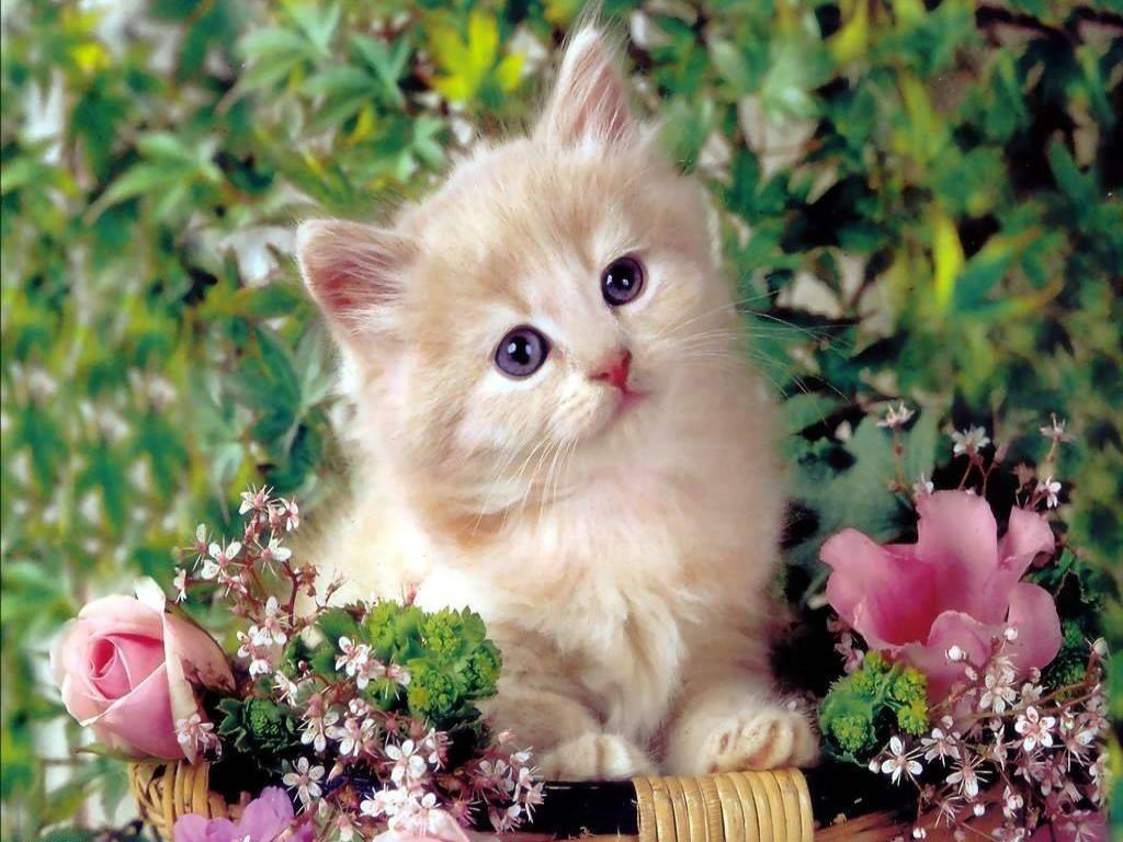 Cute Baby Cat Wallpaper Download