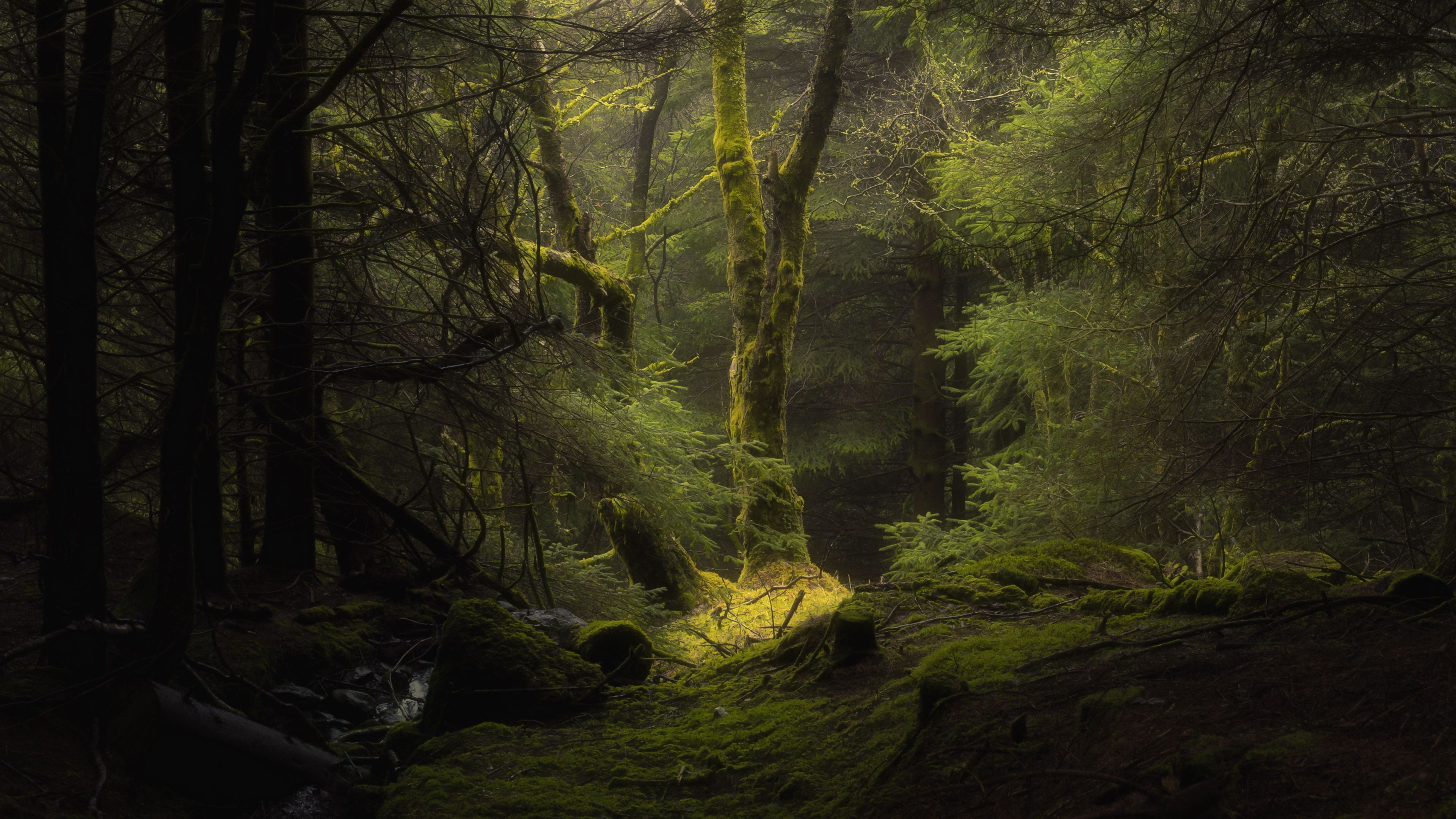 Forest Fog By John Mcsporran 3840x2160 In 2020 Hd Nature Wallpapers Nature Wallpaper Foggy Forest