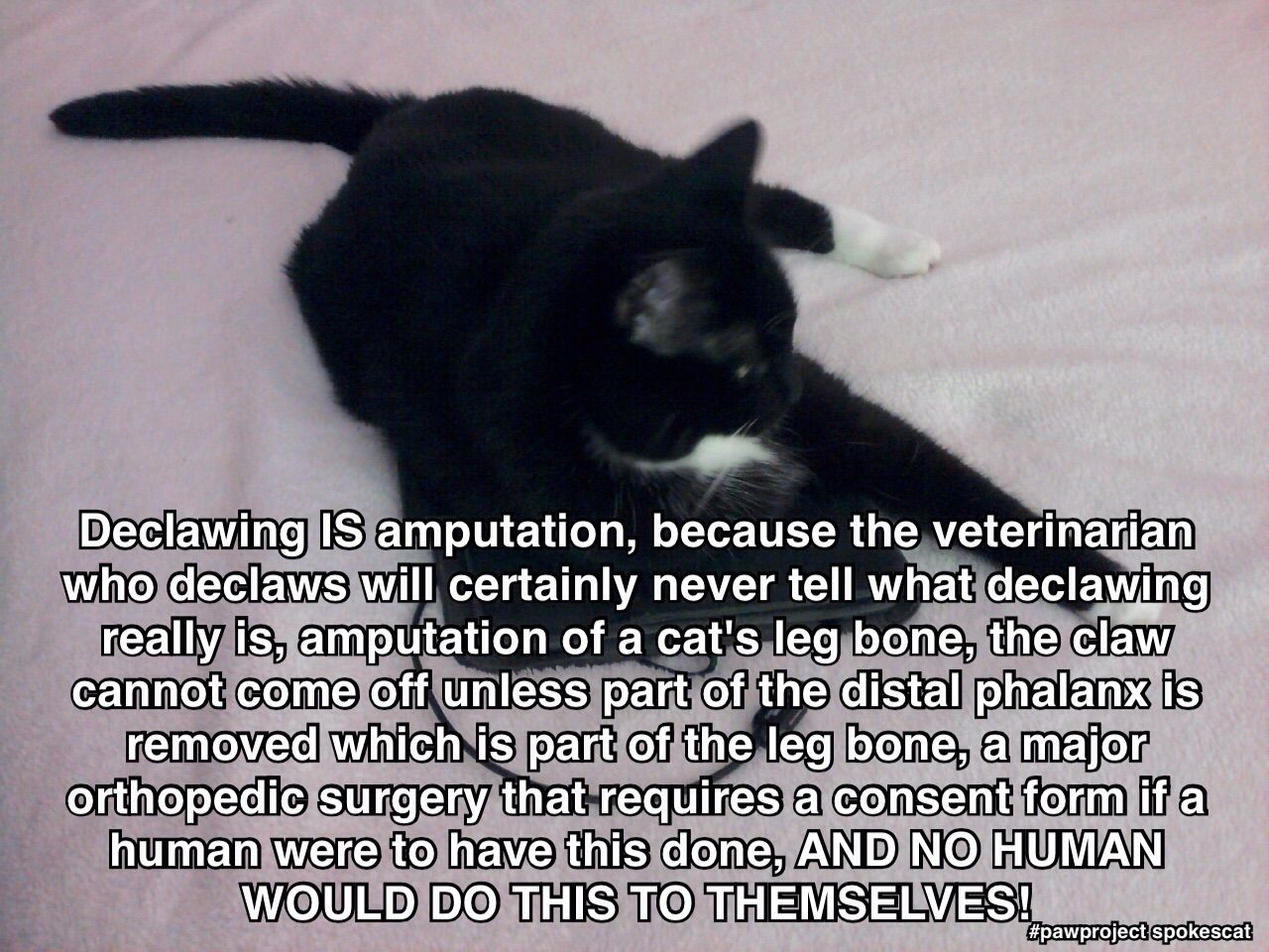 Cassandra Cat Is Not Stopping Until Declawing Is Illegal Cats