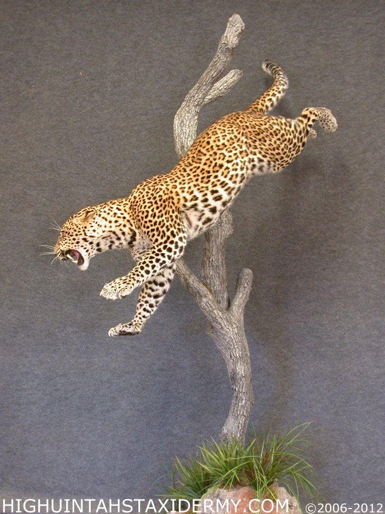leopard_034.jpg (768×1024)
