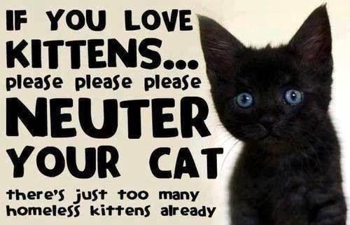 Black Kitten Spay Neuter Pets Feral Cats Kittens Animals
