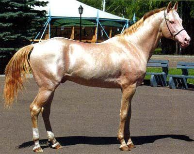Hevosten Värit