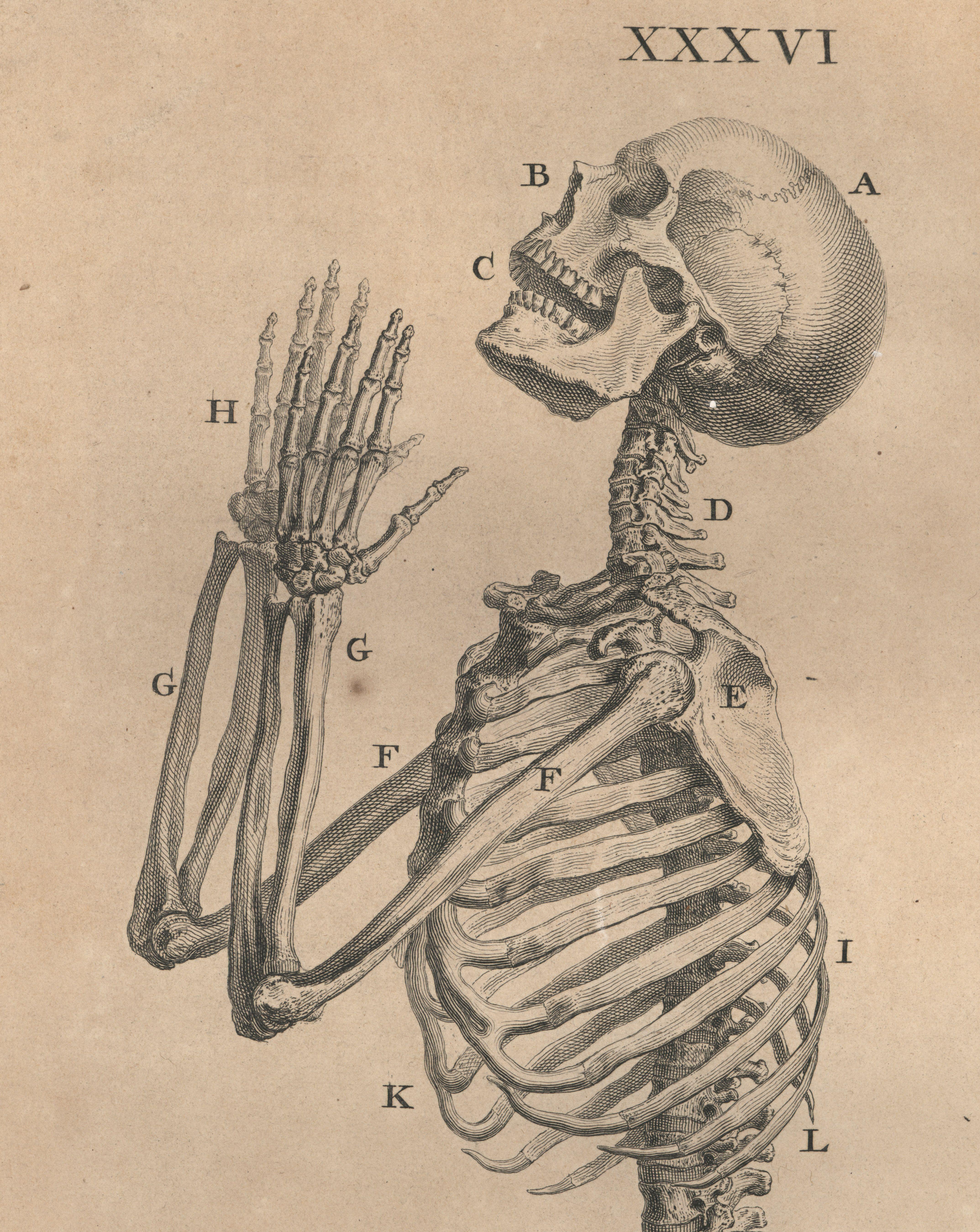 afficher l 39 image d 39 origine anatomie pinterest planche anatomique images et projets de dessin. Black Bedroom Furniture Sets. Home Design Ideas