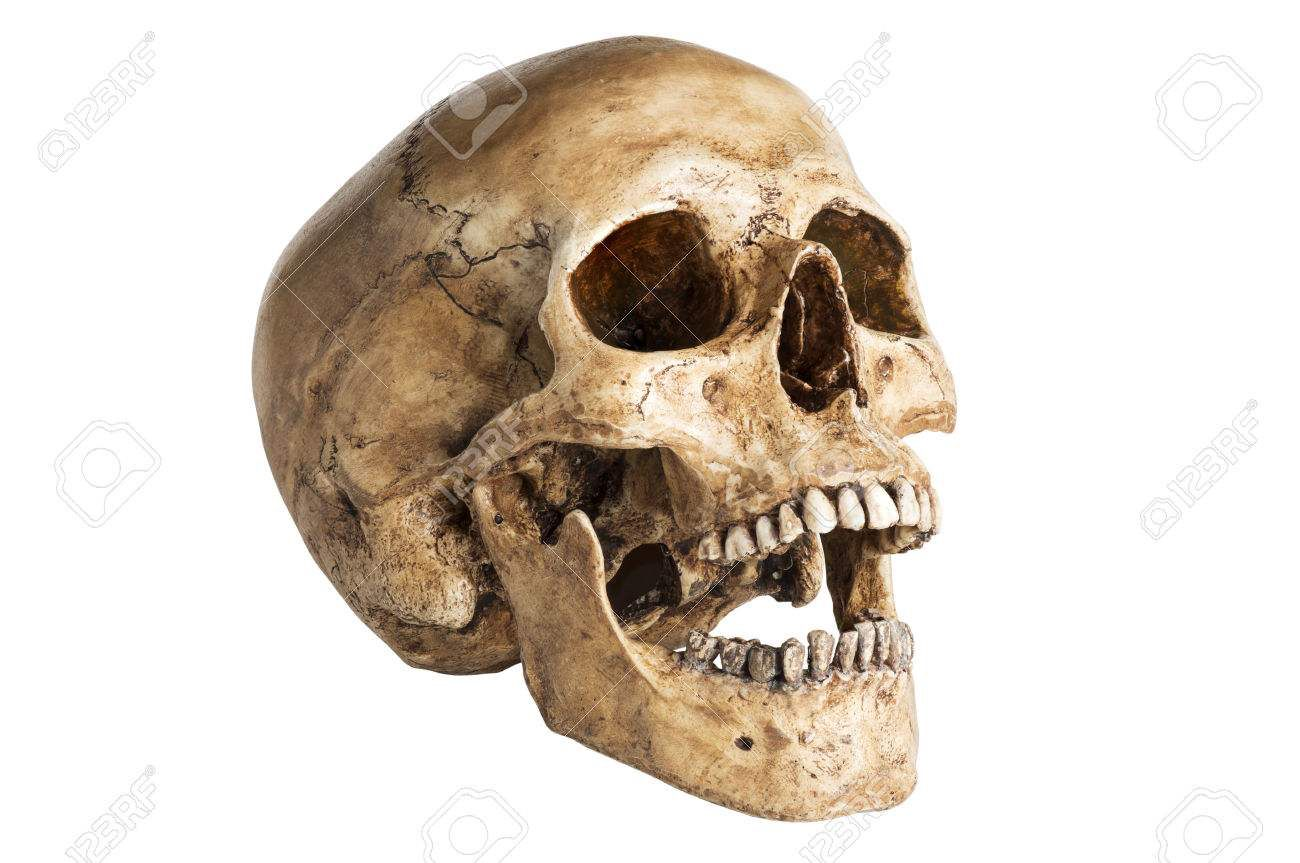 Image from http://previews.123rf.com/images/reshoot/reshoot1405/reshoot140500022/28309893-the-angle-skull-model-in-open-the-mouth-pose-isolated-on-white-background-Stock-Photo.jpg.