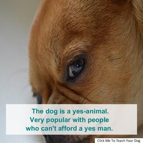 Discoverrecipes Homeideas Styleinspirationandotherideastotry Me And My Dog Dog Training Methods German Shepherd Dogs