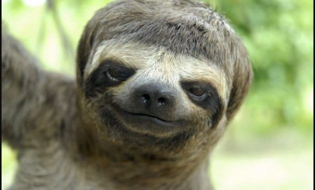 Image of: Down Syndrome Animals Sloth Pinterest Can Animals Have Down Syndrome Here This Explanation And 20