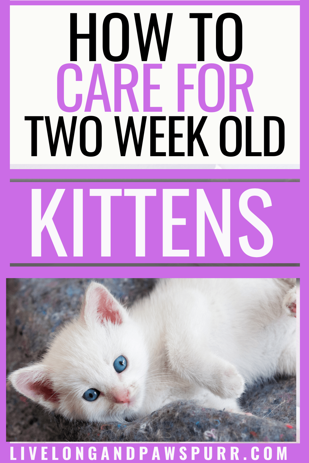 Everything You Need To Know About 2 Week Old Kittens Live Long And Pawspurr In 2020 Kittens Kitten Care Kitten Formula