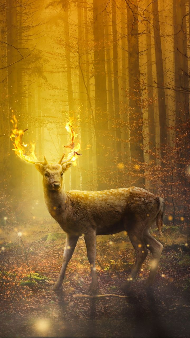 dear, forest, digital art, 720x1280 wallpaper | animals wallpapers