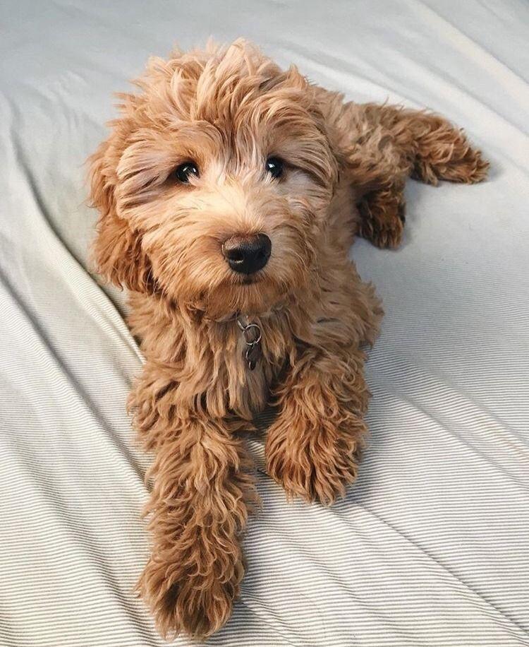 Dog Tumblr Image By On Everything Doodle Dog Cute Dog Photos