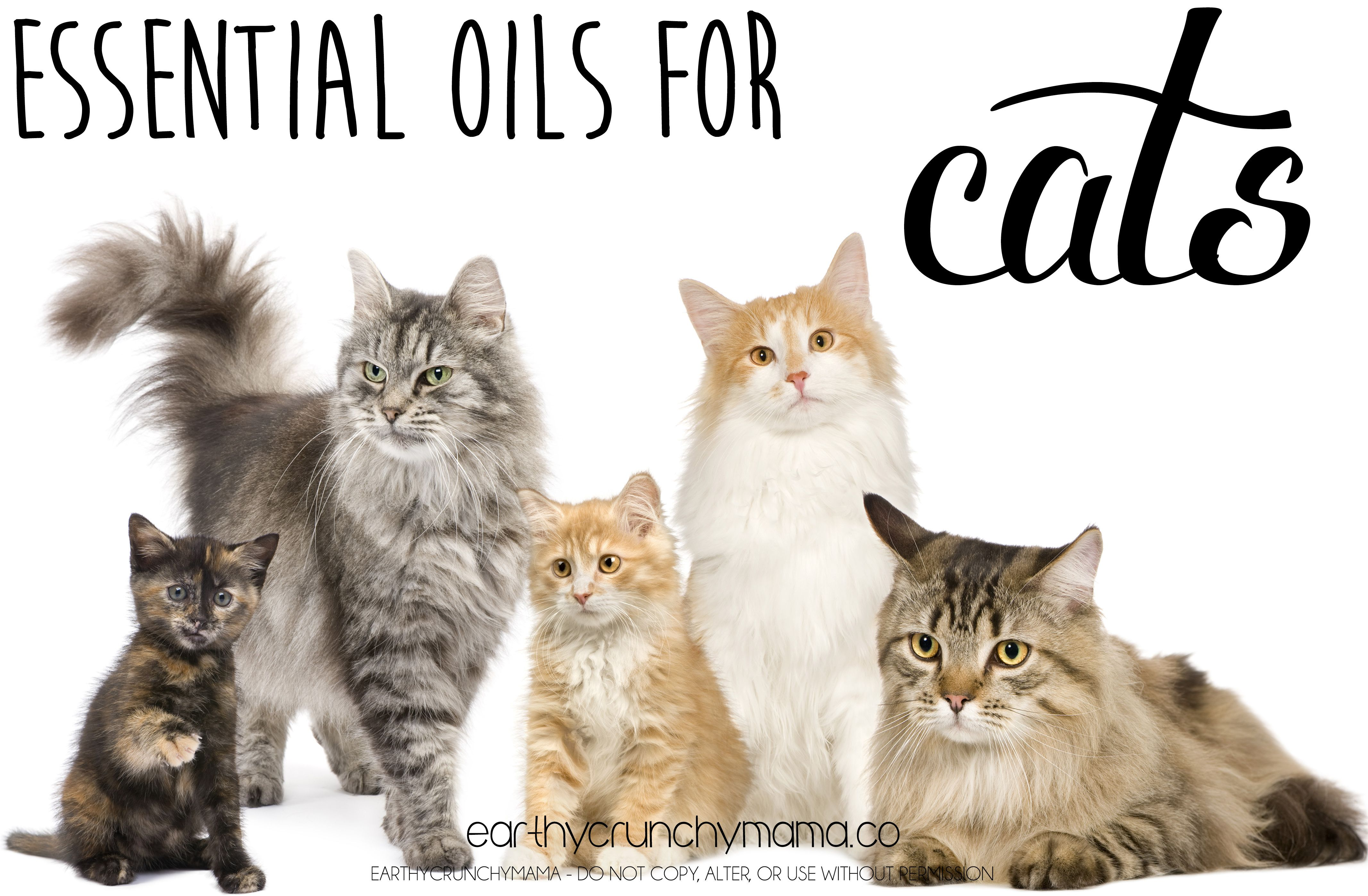 Young Living Essentials Oils Cats Eo S For Cats