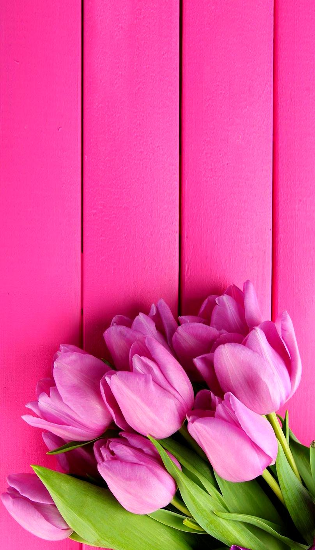 Tulipanes Fondos De Pantalla De Primavera Empapelado Floral Fondos De Pantalla Tulipanes