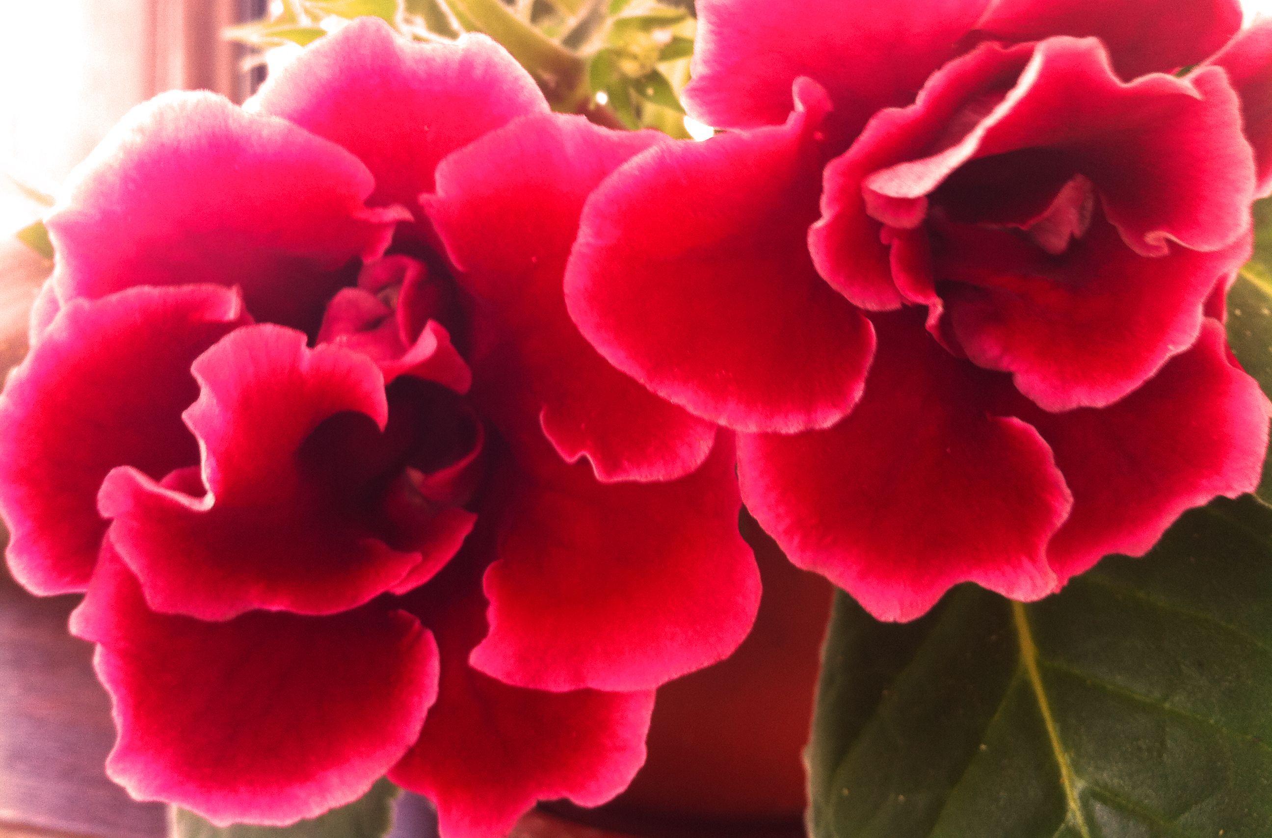 Very beautiful flowers veryniceflowers mir pinterest very beautiful flowers veryniceflowers dhlflorist Images