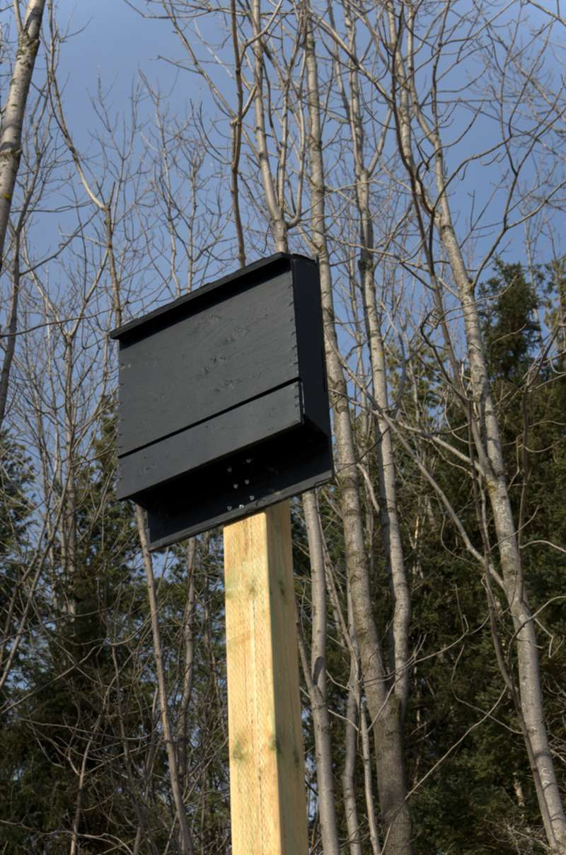 How to build a bat house in 2020 with images bat house