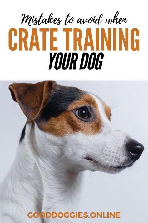 Pin On Dog Info