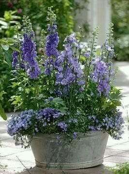 Pin by Casa Dodd on Container Gardening | Pinterest | Gardens ...