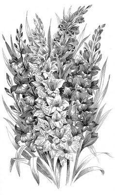 Vintage Clip Art Black And White Gladiolus Engraving Clip Art Vintage Flower Drawing Gladiolus