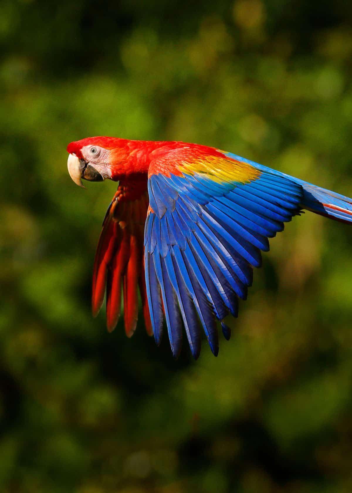 Colorful scarlet macaw birds birding beautifulnature