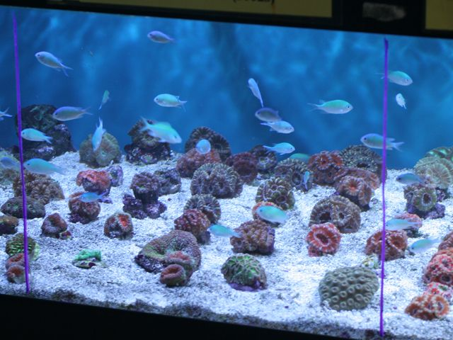 Salt water fish tank under the sea pinterest fish tanks for Well water for fish tank
