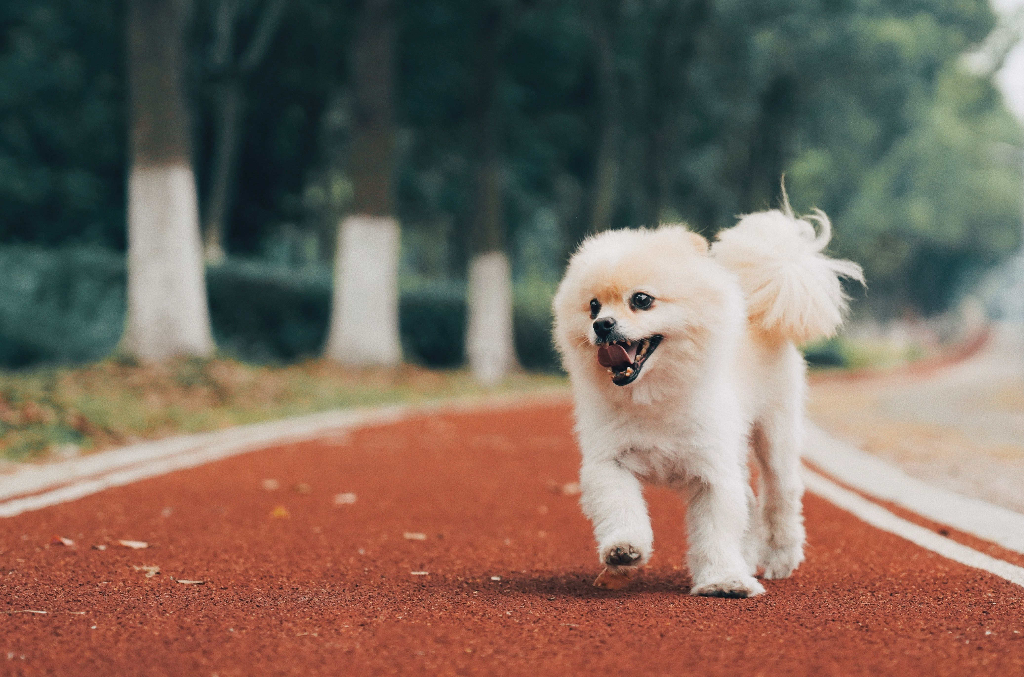 White Dog On Road With Images Small Dog Pictures White Dog Breeds White Dogs