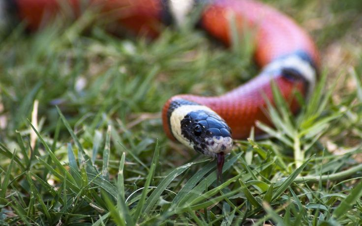 small pet snakes for sale