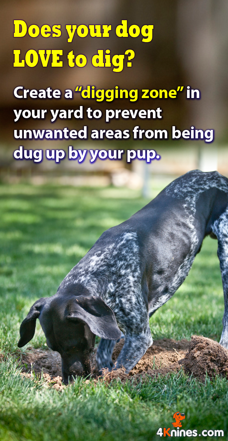 Set Aside A Specific Area In Your Yard As A Digging Zone. Teach Your Dog
