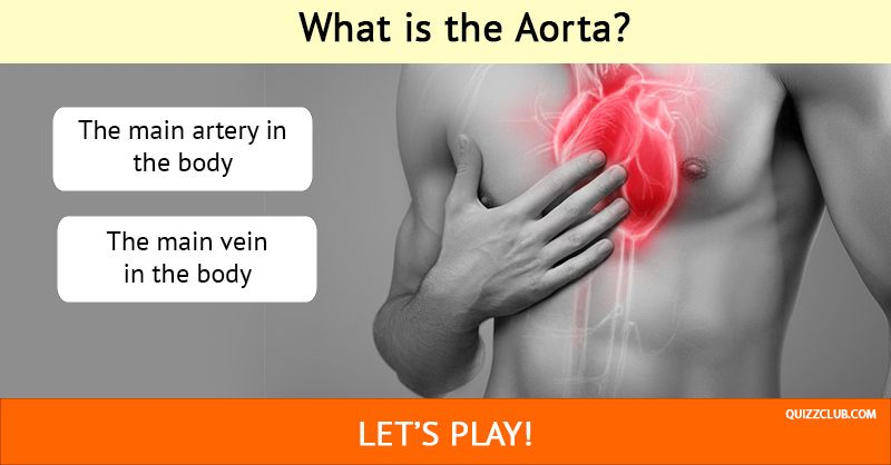 Could You Be A Doctor And Pass This Anatomy Exam Online Trivia